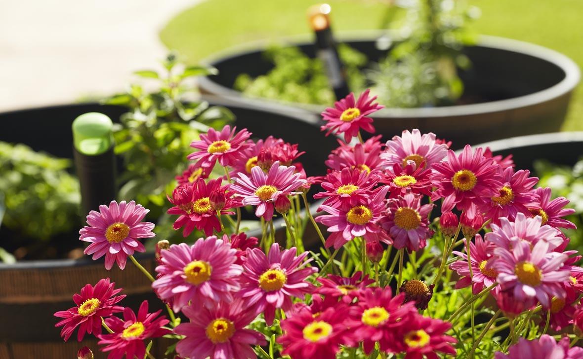 Treeby Flowers